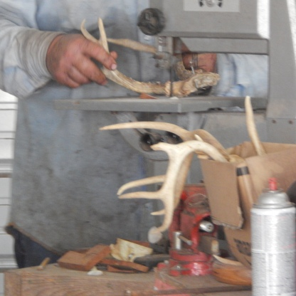 deer antler sawing antler