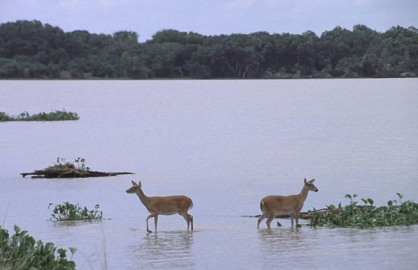 lake-texana